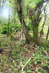 Haligi and Trees