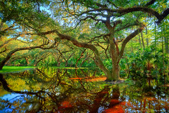 Oak-Trees-at-Fishing-Eating-Creek-Palmdale-Florida