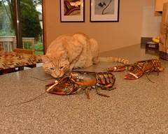 2012-09-01 Lobster 1