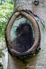 Natural oval portrait