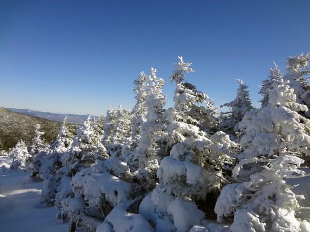 Baldpate Mountain West Peak Krummholz