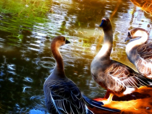 Enchanted Lake (Fabianni L. Ribeiro)
