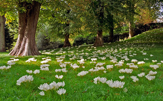 Waddesdon Manor Gardens, Buckinghamshire, Engl...