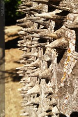 6B il baobab