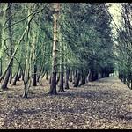 Wollaton Park