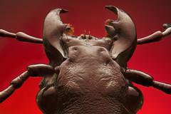 Beetlejuice Beetlejuice Beet...