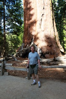 Man infront of Giant Sequoila