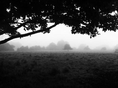 Morning Fog Emerging From Trees