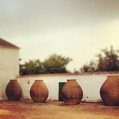 Where the wine born