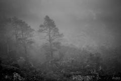 Dans la brume écossaise