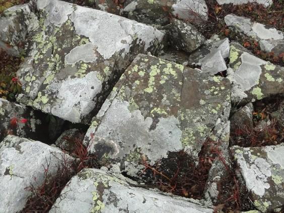 Cadillac Mountain Fungus