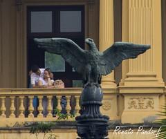 Under wings of love