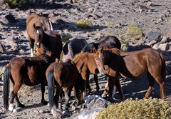 Damonte Mustangs