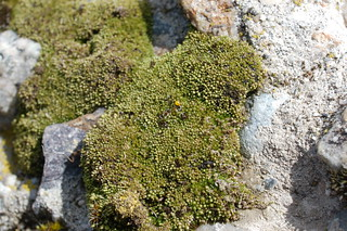 Moss closeup on abandoned manmade materials