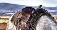"""Der Sattel. Die Sättel. Das Pferd trägt einen Sattel. • <a style=""""font-size:0.8em;"""" href=""""http://www.flickr.com/photos/42554185@N00/29548201610/"""" target=""""_blank"""">View on Flickr</a>"""