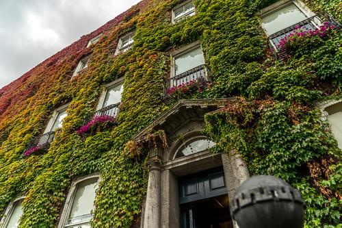 Maison végétale - Dublin