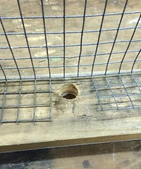 """Access hole in front of feeder <a style=""""margin-left:10px; font-size:0.8em;"""" href=""""http://www.flickr.com/photos/91024182@N04/16506708142/"""" target=""""_blank"""">@flickr</a>"""