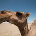 "Maranjab Desert • <a style=""font-size:0.8em;"" href=""http://www.flickr.com/photos/87069632@N00/30156992500/"" target=""_blank"">View on Flickr</a>"