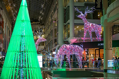 "Eaton Centre - Christmas Tree & Reindeer • <a style=""font-size:0.8em;"" href=""http://www.flickr.com/photos/65051383@N05/15803075987/"" target=""_blank"">View on Flickr</a>"