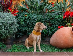 Day 487. My friend's family has five dogs. Plenty of friends for Savannah. #theworldwalk #travel #peru