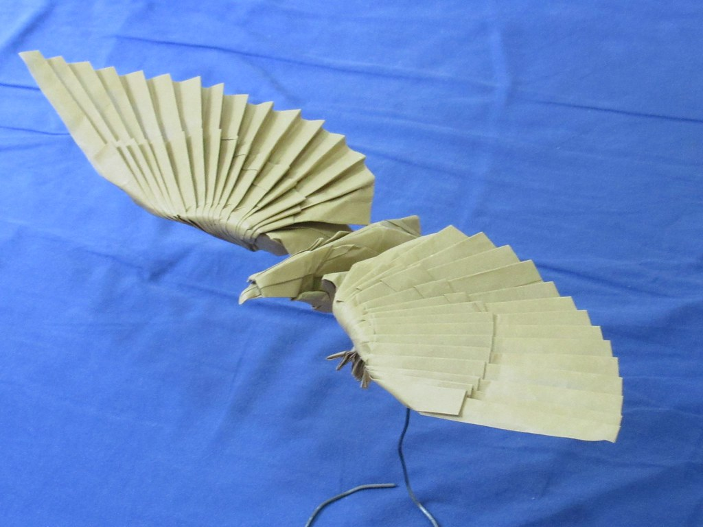 origami advanced eagle diagram avcr wiring the world 39s best photos of animals and flickr