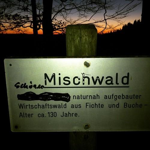 Mischwald Schöner naturnah aufgebauter Wirtschaftswald aus Fichte und Buche — Alter ca. 130 Jahre #betriebssicher #Schwarzwald #Winter #blackforrest