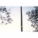 grenar blad / natur
