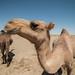 "Maranjab Desert • <a style=""font-size:0.8em;"" href=""http://www.flickr.com/photos/87069632@N00/30418256146/"" target=""_blank"">View on Flickr</a>"