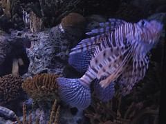 Poisson vénéneux à l'Aquarium Lisbonne
