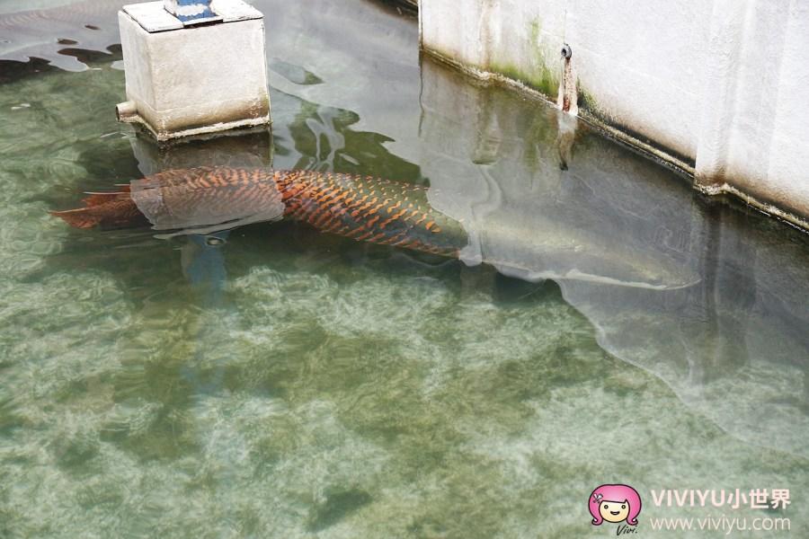 [沙巴.山打根]森森水上聚落Sim Sim Water Village~水上人家船屋生活.透過橋與橋之間連接.第八橋『森森海鮮食店』 @VIVIYU小世界