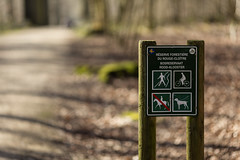 Forêt de Soignes (Photoresk)