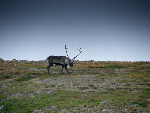 Lappland-092015-17