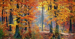 """Der Herbst. Die Herbste. Im Herbst verfärben sich die Blätter, sie werden bunt. • <a style=""""font-size:0.8em;"""" href=""""http://www.flickr.com/photos/42554185@N00/29490457753/"""" target=""""_blank"""">View on Flickr</a>"""