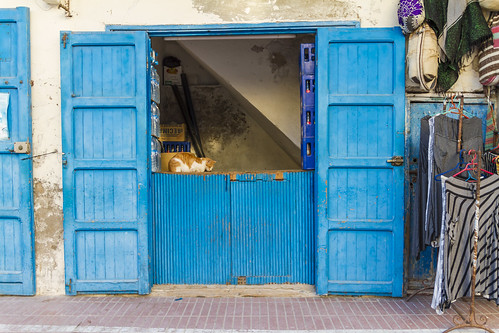Katzenstadt Essaouira