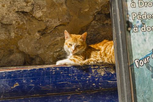 Katzenstadt Essaouira II