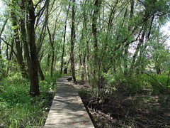 Boardwalk path - very marshy island