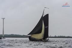 Zuidwal 2015