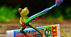"""Die Zahnbürste. Die Zahnbürsten. Der Frosch trägt eine Zahnbürste. Hinter dem Frosch liegt eine Tube Zahnpasta. • <a style=""""font-size:0.8em;"""" href=""""http://www.flickr.com/photos/42554185@N00/28699065070/"""" target=""""_blank"""">View on Flickr</a>"""