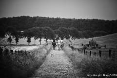 Woman on horseback (1 van 1)