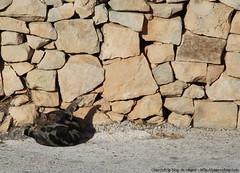 La limpieza es lo primero... en Ħaġar Qim