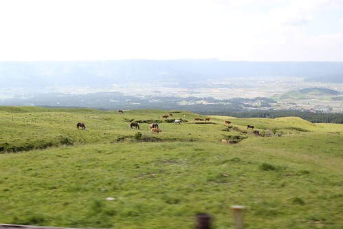Horses Grazing in the Fields of Mount Aso