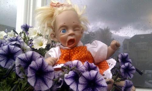 petunia op wacht