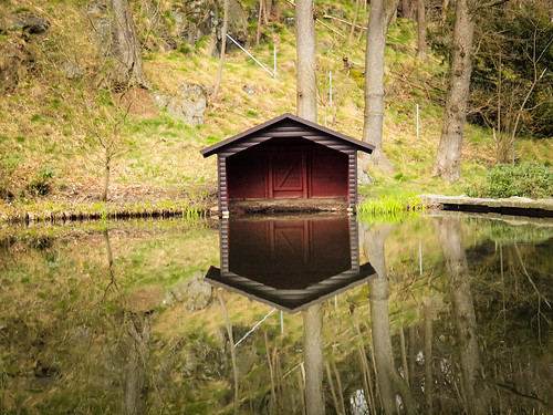 113/366 - Reflection by Flubie