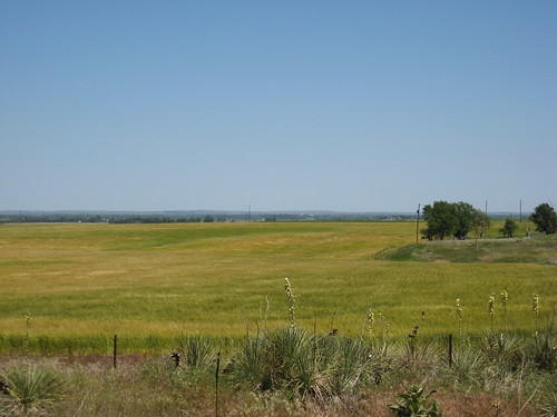 Wheat in North Platte, NE on 6/5