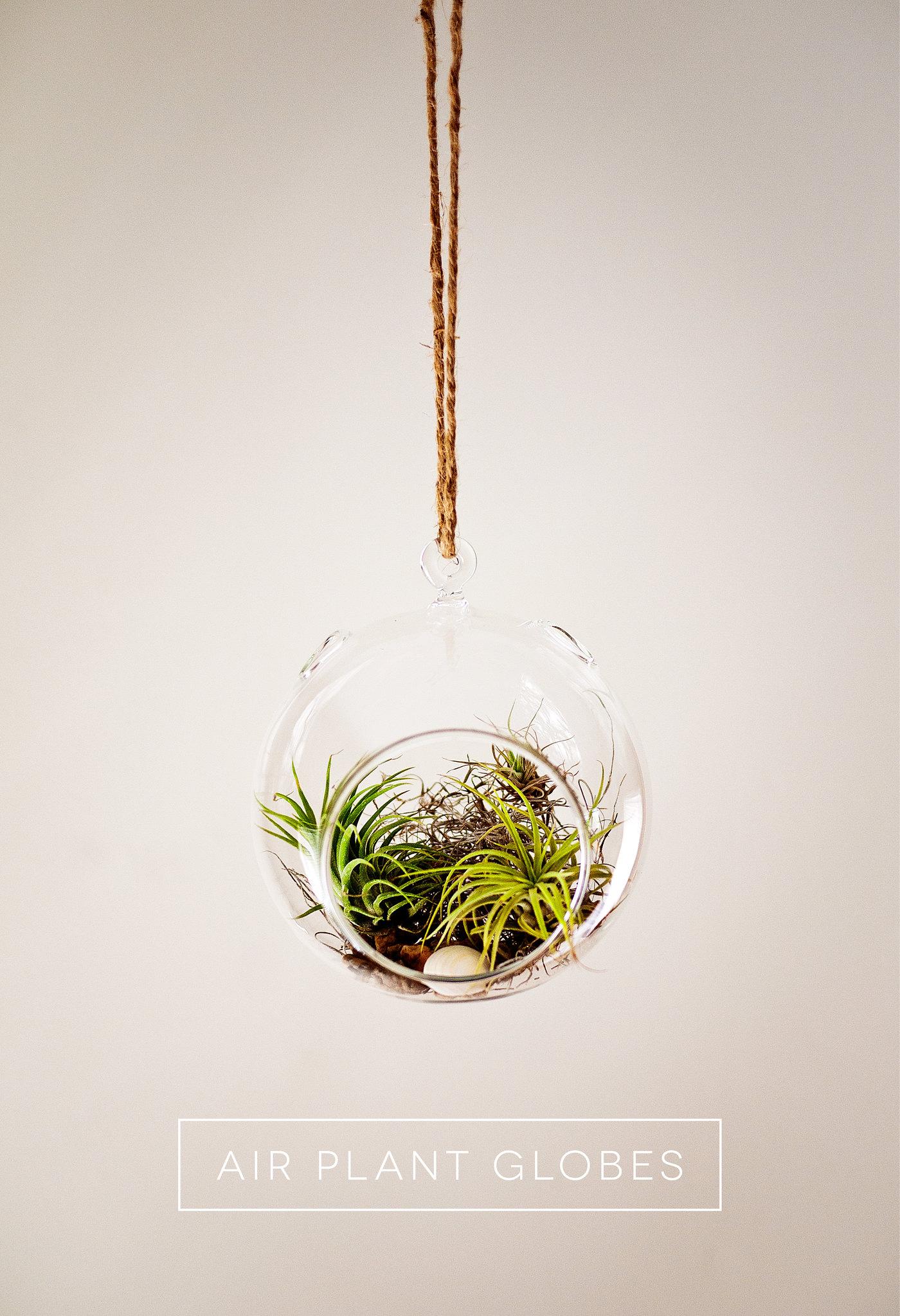 Air Plant Globe Terrarium 1
