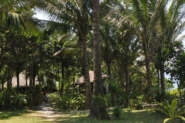 coconut huts
