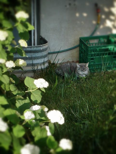 Turquoise Seeksucker Truffle