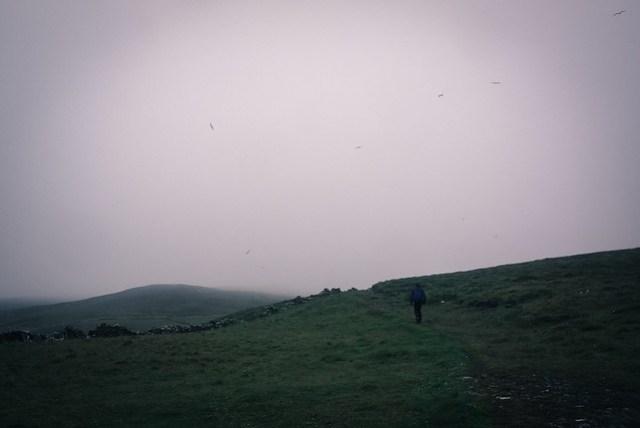 Seagulls over Inishshark