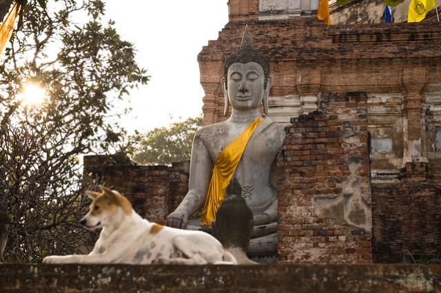 Buda assegut amb un gos vigilant