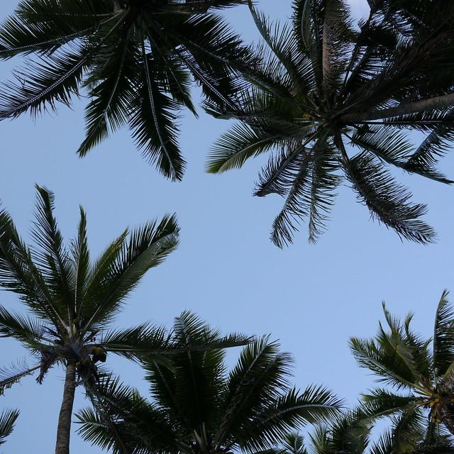 Sky and Palms